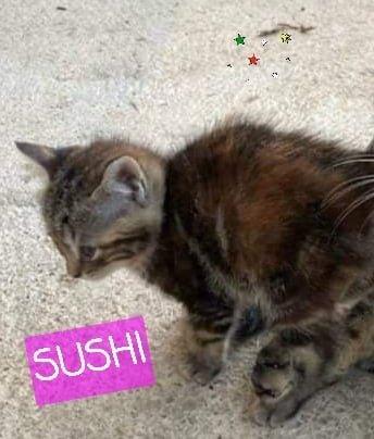 Photo N°1 de SUSHI